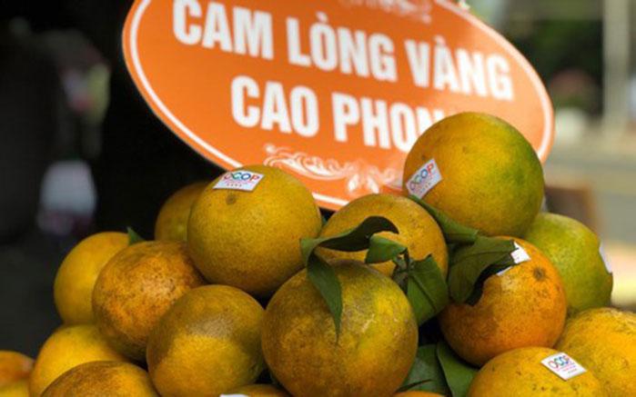camngoai-camcaophong-1